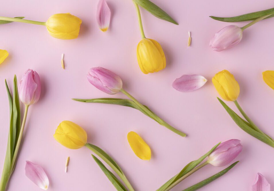 top-view-blooming-tulips
